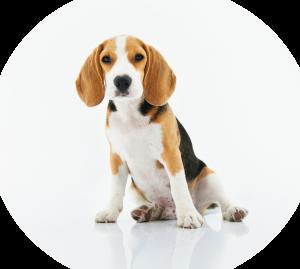 pup hond opvang
